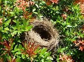 Nest in flowering bushes
