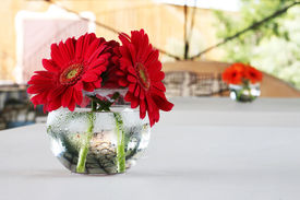foto of flower vase  - red and orange gerber daisies in round vases decorate the table at a wedding reception - JPG