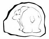Arctic Bear