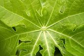 Green Leaf For Backgrounds