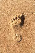 Closeup Of Foot Print On Beach