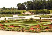 Beautiful Ornamental Garden