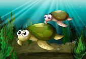 stock photo of cooter  - illustration of a tortoise under sea water - JPG
