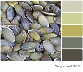 A pumpkin seed background colour palette with swatches of complimentary colours