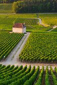 Vineyards in Gevrey chambertin burgundy France