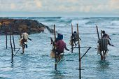 Many Stilt Fishing Sri Lanka Traditional Rock