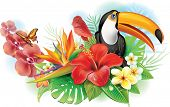 image of toucan  - Red hibiscus - JPG