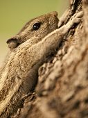Small chipmunk clenching himself to a tree