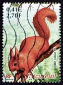 Postage Stamp France 2001 Red Squirrel, Animal