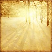 Grunge image of winter forest at sunset.