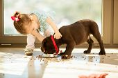 stock photo of little puppy  - Beautiful little girl watching her puppy eat in the living room - JPG
