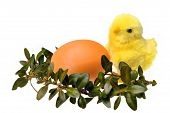 Easter Chicken Egg Boxwood Isolated