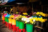 Colorful Flower Stall Bathed In Early Morning Sunshine