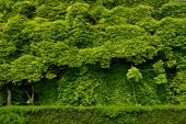 Background From Green Foliage