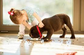 pic of little puppy  - Beautiful little girl watching her puppy eat in the living room - JPG