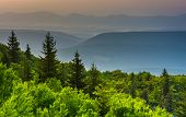 Pine Trees And Distant Mountains, Seen From Bear Rocks Preserve, Monongahela National Forest, West V