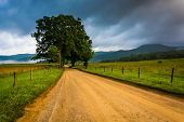 foto of cade  - Tree along a dirt road on a foggy morning at Cade - JPG