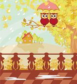 Owls Couple Under Umbrella, Autumn Day