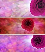 Red Rose Valentine Rose Banner
