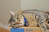 Gray Tabby Cat Relaxing On Cardboard Box