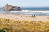 Horses on Cannon Beach