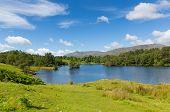 Tarn Hows Lake District National Park Cumbria England uk