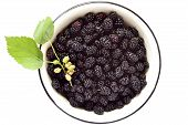 pic of mulberry  - Fresh mulberry in the enameled bowl - JPG