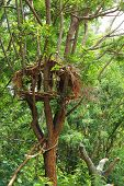 Home On A Tree In The Garden With Nature.