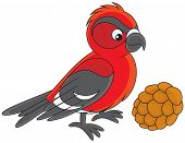 stock photo of crossbill  - red and black crossbill with a cone - JPG