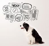Cute black and white border collie with barking speech bubbles above her head