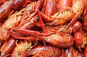 image of craw  - closeup boiled craw fish for background uses - JPG