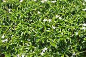 Beautiful White Flower Spring Blossom In The Garden