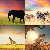african safari collages