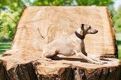 Greyhound laying