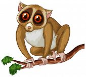 Illustration of a loris on a tree