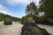 Landscape In Cape Scott Park. Vancouver. Canada
