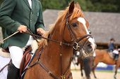 image of bridle  - Brown horse portrait with bridle during horse show - JPG