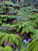 Treefern Gully