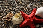 Seastar And Seashells On Pebbles