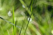 picture of blured green grass after rain