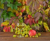 Vine And Grape