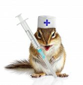 Funny Chipmunk Veterinarian With Syringes