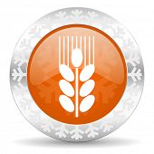 grain orange icon, christmas button, agriculture sign