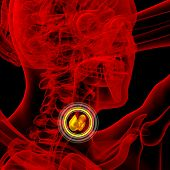 3D Render Medical Illustration Of The Thyroid Gland