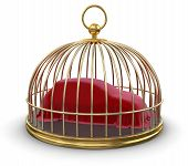 Gold Cage with Covering Car (clipping path included)