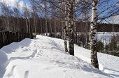 Winter Rural Landscape With Bare Birches