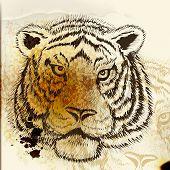 Hand Drawn Tiger Portrait