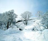 Winter Snow Scene Road