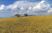 pic of hayfield  - Meadow with two trees on the flat top of the mountain - JPG