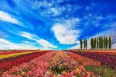 pic of windy  - Windy spring day - JPG